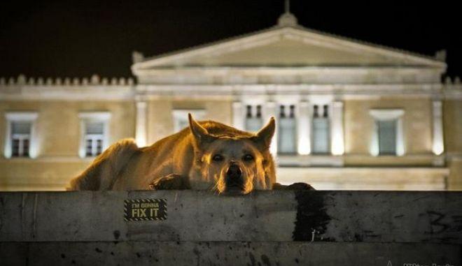 """Ένα δάκρυ! Πέθανε ο Λουκάνικος, ο """"σκύλος επαναστάτης"""""""