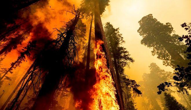 Πυρκαγιά σε δάσος της Καλιφόρνια