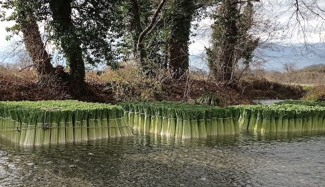Ο ποταμός των πράσων: Καλλιεργητές καθαρίζουν τη σοδειά δημιουργώντας μοναδικές εικόνες