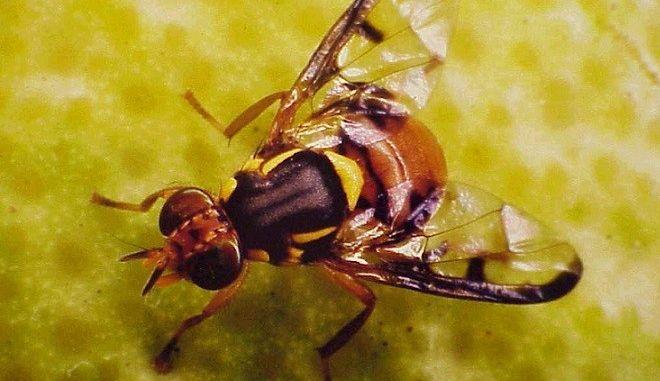 Έρευνα: Φορείς εκατοντάδων μικροβίων οι μύγες