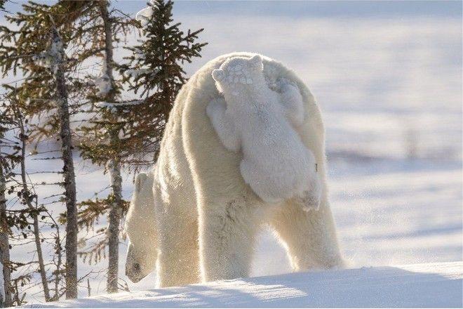 Όταν η φύση έχει κέφια: Οι 10 πιο αστείες φωτογραφίες του 2017