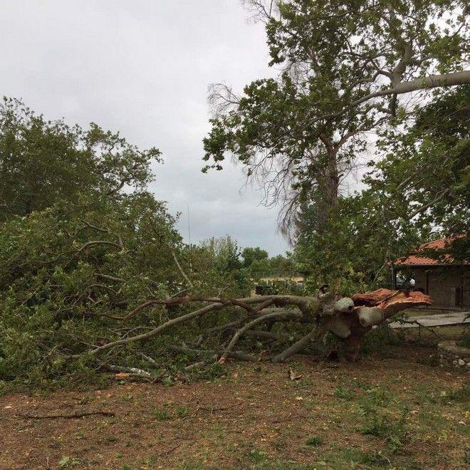 Πτώση δέντρων και ζημιές στο Κέντρο Βυζαντινού Πολιτισμού