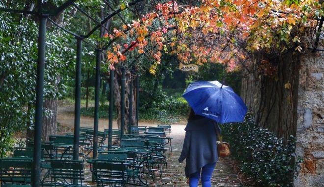 Στιγμιότυπο από τον Εθνικό Κήπο κατα την διάρκεια της καταιγίδας στην Αθήνα, την Τετάρτη 8 Νοεμβρίου 2017. (EUROKINISSI/ΓΙΩΡΓΟΣ ΚΟΝΤΑΡΙΝΗΣ)