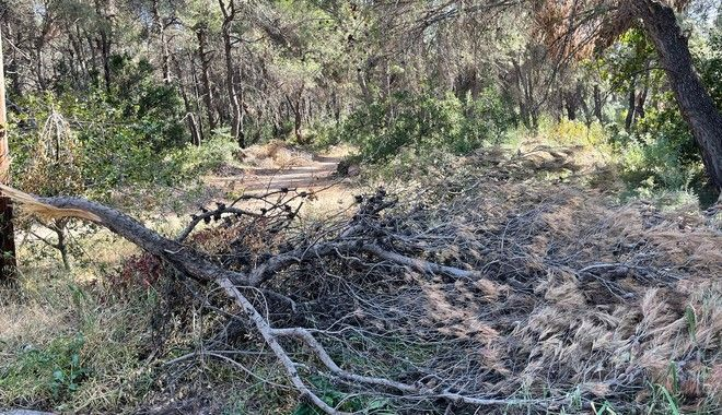 Κίνδυνος φωτιάς: Κλαδιά, κουκουνάρια και σκουπίδια - Τι είδαμε στα βόρεια προάστια