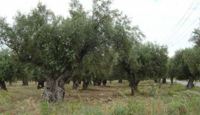 Νεκρός αγρότης από ανατροπή τρακτέρ στη Μεσσηνία
