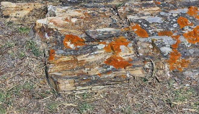 Γιγαντιαίος κορμός απολιθωμένου δέντρου βρέθηκε σε χωριό της Λήμνου
