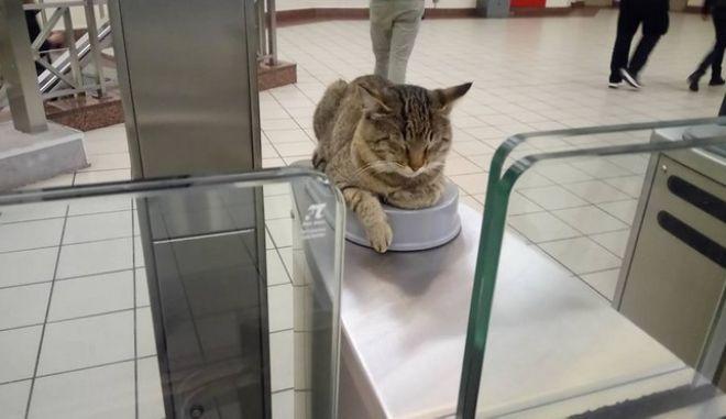 Ο γάτος που 'τεστάρει' το ηλεκτρονικό εισιτήριο στον σταθμό του μετρό