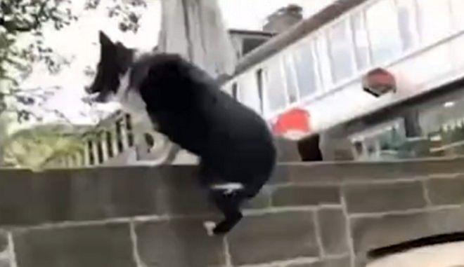 Σκύλος κάνει Parkour στο Βερολίνο