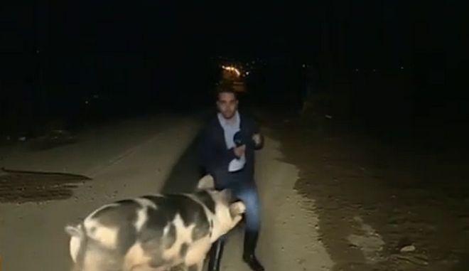 Το περιστατικό με το γουρούνι και τον ρεπόρτερ του ΑΝΤ1