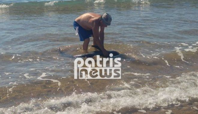 Πύργος: Δελφίνι βγήκε στα ρηχά της Σπιάτζας- Κινητοποίηση για τη σωτηρία του