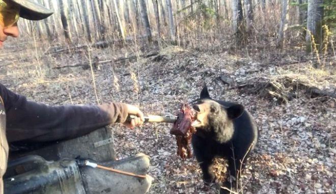 Ατρόμητος ή αφελής; Ταΐζει αρκούδα με γυμνό χέρι