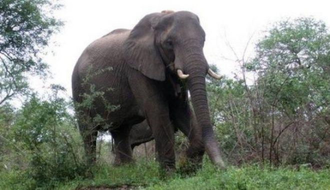 Ελέφαντας αναποδογύρισε το αμάξι τουριστών και θανατώθηκε