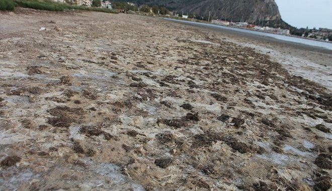 Ναύπλιο: Ο πολιτισμός της νάιλον σακούλας σε παραλία - Εικόνες θλίψης
