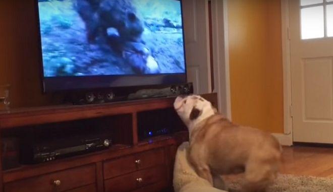 Σκύλος χαλάει κόσμο όταν αρκούδα επιτίθεται στον Λεονάρντο ντι Κάπριο