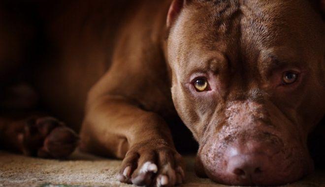Σέρρες: Στον εισαγγελέα ο 37χρονος που χτύπησε μέχρι θανάτου και έκαψε δύο σκυλιά