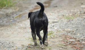 Αποτρόπαιο: Σκύλοι κατασπάραξαν 12χρονη ενώ γύριζε από το σχολείο