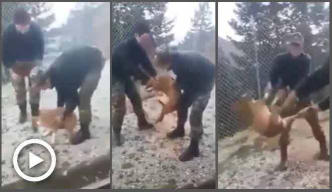 Στοπ - καρέ από το βίντεο κακοποίησης σκύλου στην Κόνιτσα