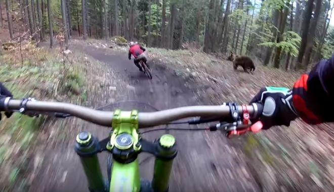 Βίντεο-θρίλερ: Αρκούδα κυνηγά ποδηλάτες
