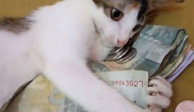 """Γάτα """"Σκρουτζ"""": Δεν αφήνει κανέναν να της πάρει τα λεφτά"""