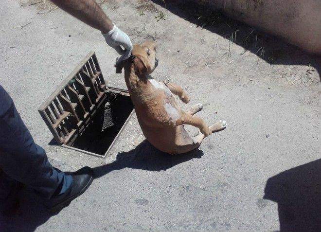 Φρίκη στα Χανιά! Κρέμασε σκύλο μέσα σε φρεάτιο