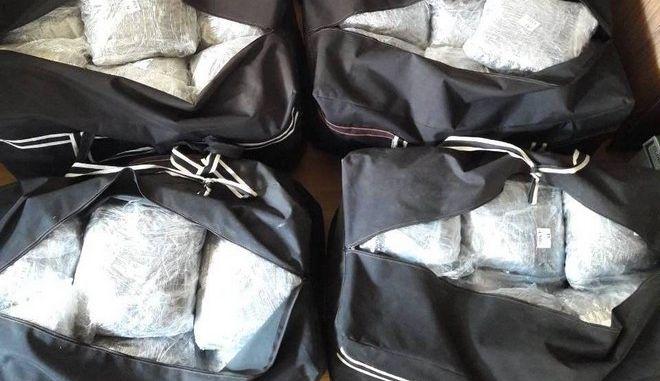 Έκρυψε πάνω από 263 κιλά κάνναβης μέσα σε θάμνους