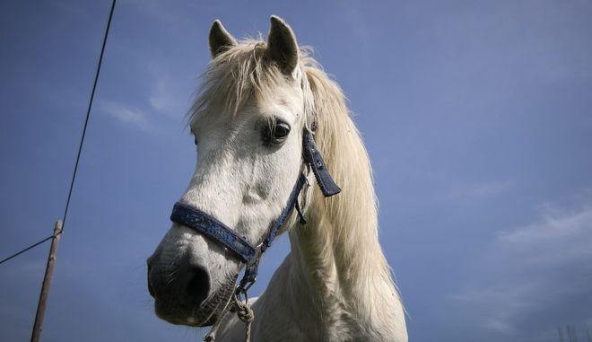 Άλογο, Φωτογραφία Αρχείου