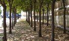 Δέντρα στην Αθήνα, Αρχείο