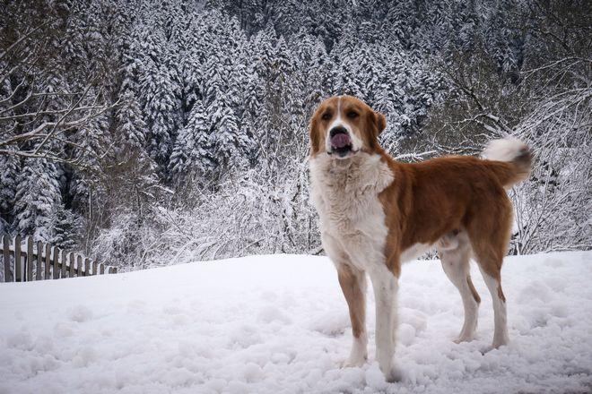 Σκύλος στα χιονισμένα Τρίκαλα