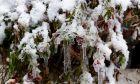 Χιόνια στο Συκούριο, Αρχείο