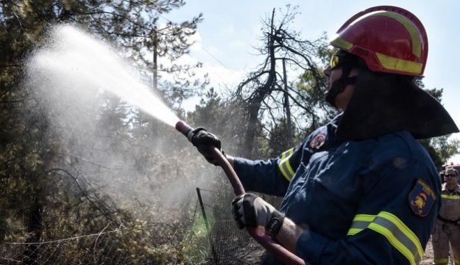 Στιγμιότυπα από την πυρκαγιά σε δασική περιοχή στο Δαφνί. Τετάρτη 19 Ιουλίου 2017.  (EUROKINISSI / ΤΑΤΙΑΝΑ ΜΠΟΛΑΡΗ)