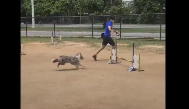 Ένας σκύλος - Survivor σπάει κάθε ρεκόρ σε στίβο μάχης