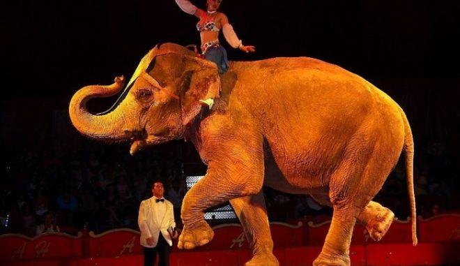 Τέλος τα λιοντάρια, οι τίγρεις και οι ελέφαντες από τα τσίρκα