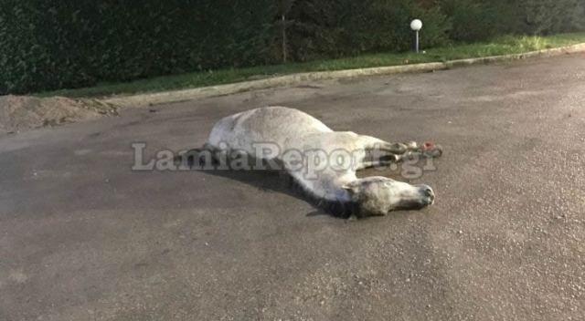 Στυλίδα: Τροχαίο με άλογο - Το παρέσυρε και εγκατέλειψε στο δρόμο
