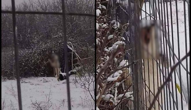 Κτηνωδία στη Δράμα. Άφησε τον σκύλο του να πεθάνει από το κρύο, δεμένο σε χωράφι