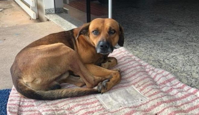 Συγκίνηση: Ένας σκύλος περιμένει ακόμα στο νοσοκομείο τον ιδιοκτήτη του