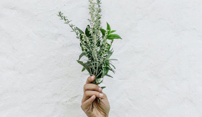 Σημαντικές ενδείξεις ότι η κρητική χλωρίδα μπορεί να μειώσει τα συμπτώματα του κορονοϊού