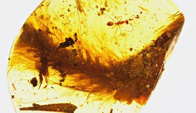 Μοναδική ανακάλυψη: Βρέθηκε καλά διατηρημένη ουρά φτερωτού δεινόσαυρου