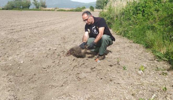 Το ένα από τα αρκουδάκια που βρέθηκαν θαμμένα