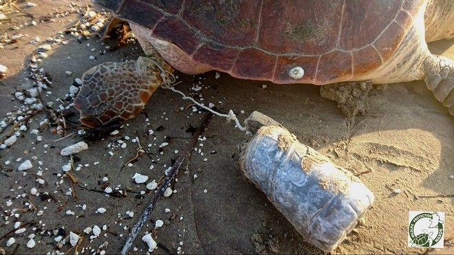 Ψαράς κακοποίησε θαλάσσια χελώνα και ανέβασε το βίντεο στο facebook