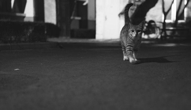 Γάτα σε δρόμο (ΦΩΤΟ αρχείου)