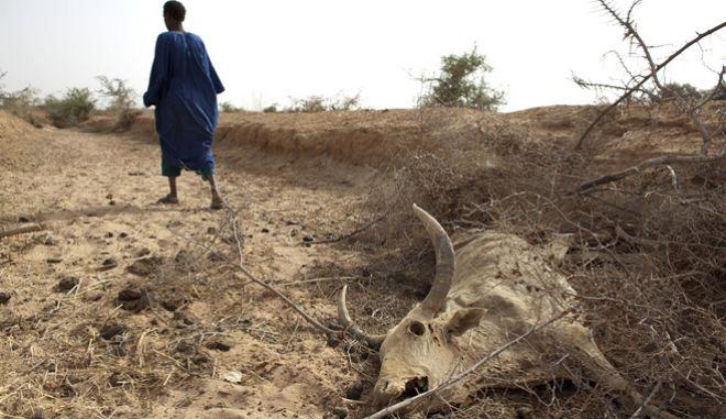 Η ξηρασία στην Αφρική καταδικάζει σε πείνα 20 εκατομμύρια ανθρώπους