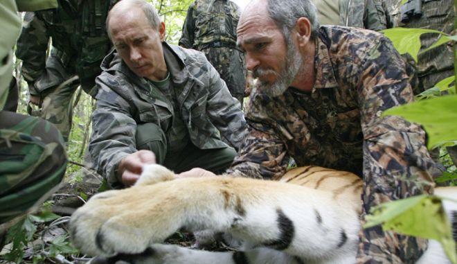 Πώς ο Πούτιν έσωσε την Τίγρη της Σιβηρίας