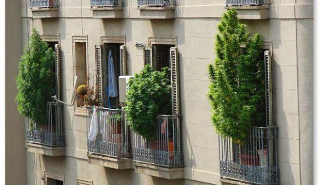 Η μαριχουάνα και η ζάλη των Ισπανών αστυνομικών