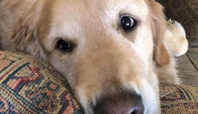 Κλεφτρόνι και τζέντλεμαν - Ο σκύλος που έχει κατακλέψει τα αφεντικά του