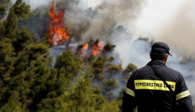 Πυρκαγια σε δασική έκταση στην Βοιωτία στα Δερβενοχώρια,στην περιοχη Στεφάνη,δυτικα της Πάρνηθας.Απο το πρωί επιχειρούν ισχυρές δυνάμεις της πυροσβεστικής από εδάφους και από αέρος,Κυριακή 26 Ιουνίου 2016 (EUROKINISSI/ΣΤΕΛΙΟΣ ΜΙΣΙΝΑΣ)