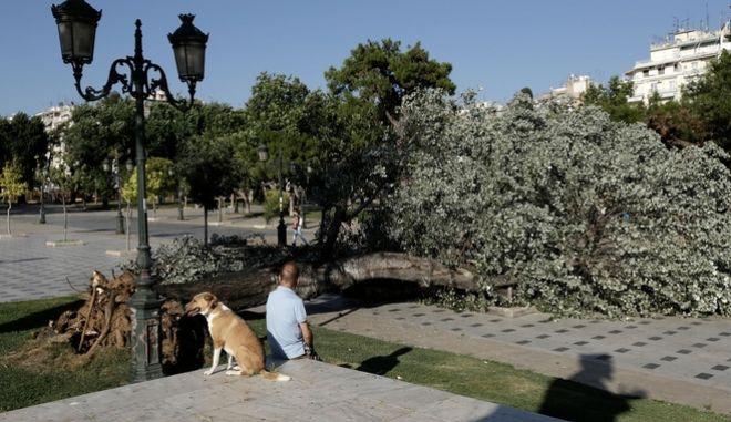 Απότομη η αλλαγή του καιρού: Ισχυρός αέρας ξερίζωσε δέντρο στο κέντρο της Θεσσαλονίκης