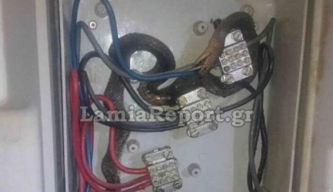 Λαμία: Φίδι μπήκε σε ρολόι της ΔΕΗ και έπαθε ηλεκτροπληξία