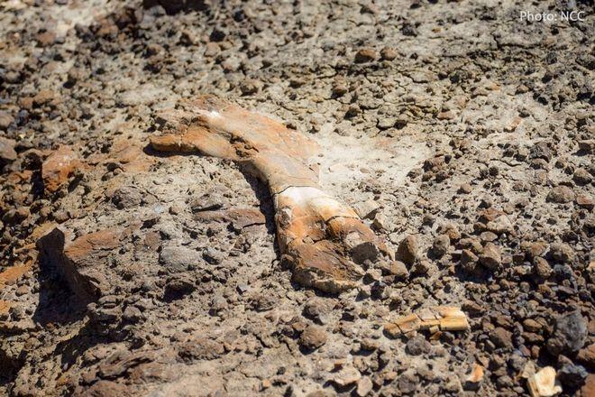 Δωδεκάχρονος βρίσκει κατά λάθος απολίθωμα δεινοσαύρου 69 εκατομμυρίων ετών