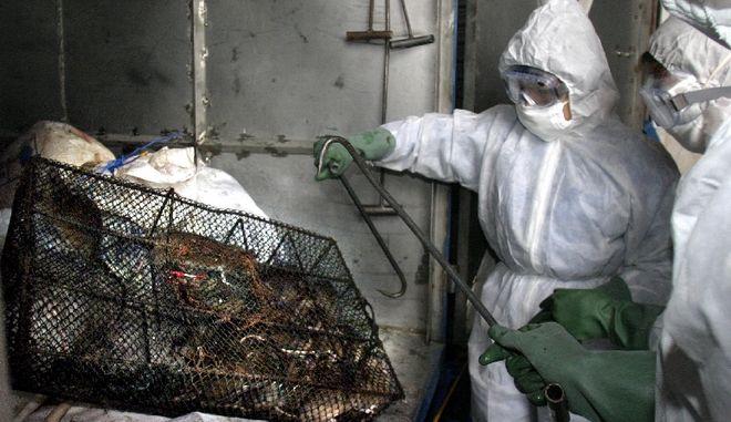 Τσαπάρε: Σπάνιος θανατηφόρος ιός των ζώων μπορεί να μεταδοθεί από άνθρωπο σε άνθρωπο