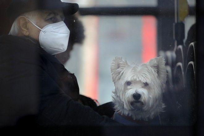 Άνδρας με μάσκα μαζί με το σκυλάκι του